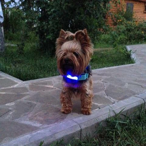 light-up-dog-and-pet-collar-reflective-for-nighttime