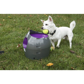 PetSafe-Automatic Ball Launcher--Gray-Interactive-Dog-Toys