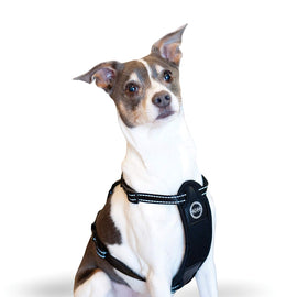 K&H Pet Products Travel Safety Pet Harness Small Black Dog Travel - London the Local