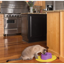 PetSafe-Current Pet Fountain-Small-Purple-Automatic Feeding and Watering-Dog-Feeding and Watering