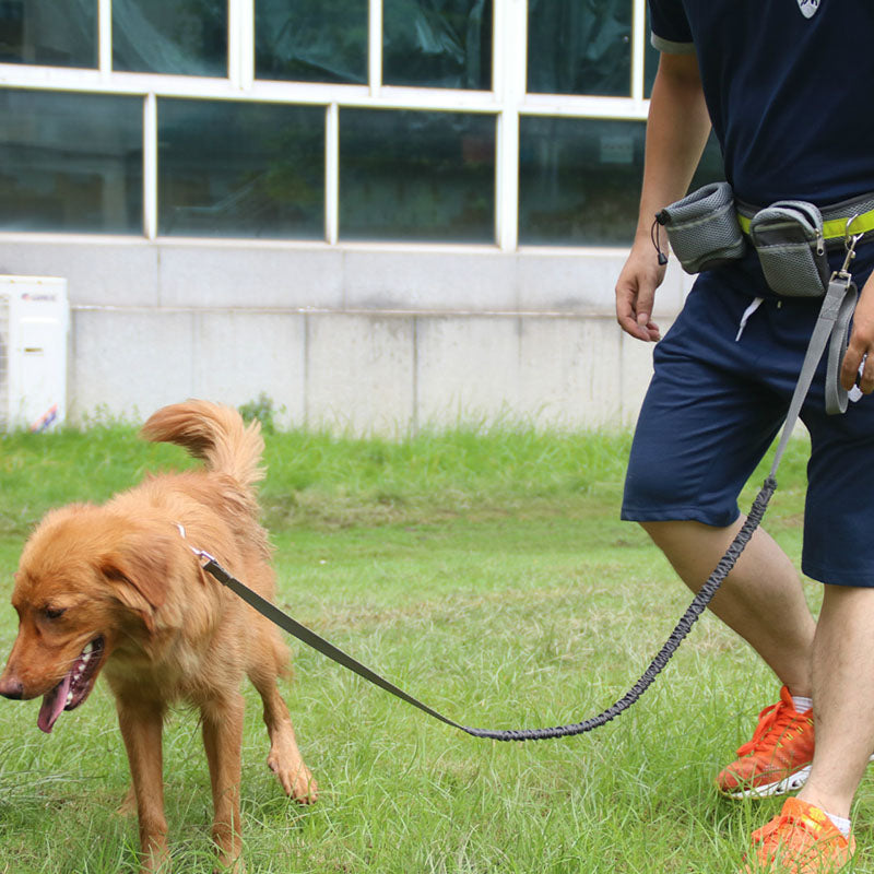 Dog Running Leash with Reflective Strip Running Dog Leash - London the Local