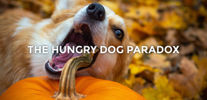 The Hungry Dog Paradox