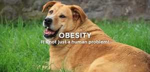 Obesity - It's not just a human problem!