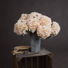 Single Peachy White Hydrangea Stem
