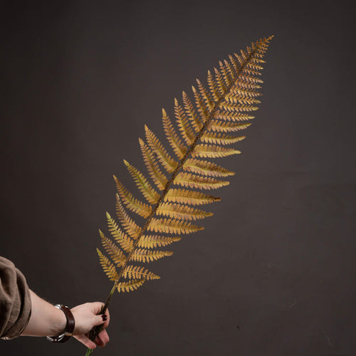 Autumn Fern Stem