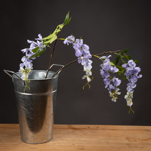 Single Lilac Wisteria Stem