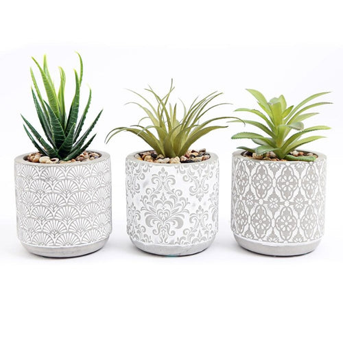 Set of Three Mini Potted Succulents