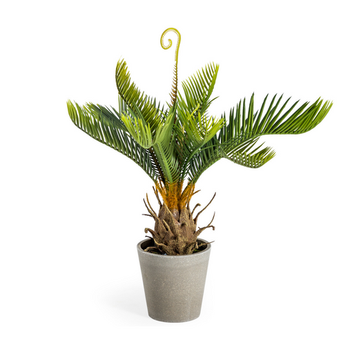 Artificial Potted Cycad Plant