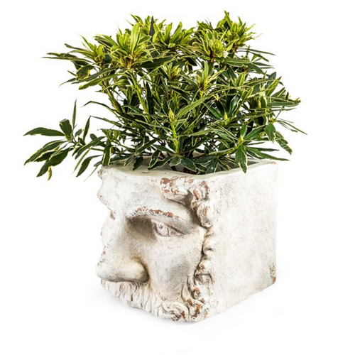 Large Stone Effect Classical Face Planter
