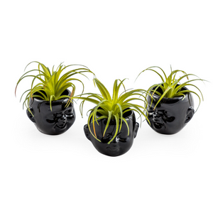 Set of 3 Black Mini Baby Face Pots