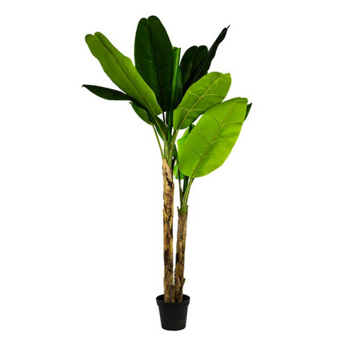 2.1m Tall Artificial Large Potted Banana Tree