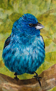 Indigo Bunting limited edition archival pigment print