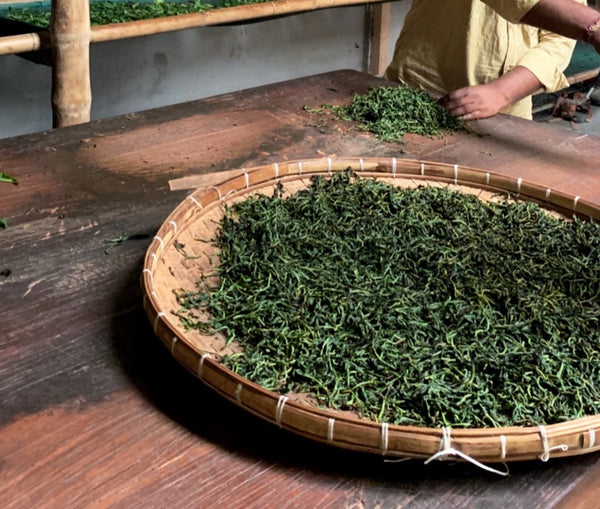 Hand-rolled tea at Assam Heritage Estate. Photo by Big Heart Tea Co.