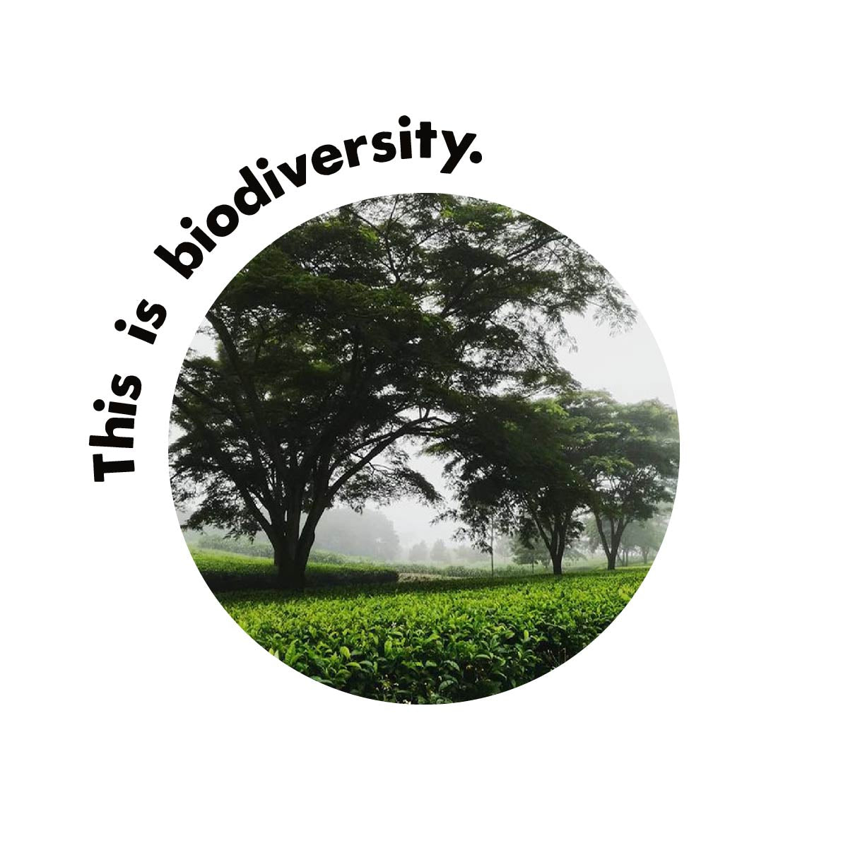 This is Biodiversity with Tree