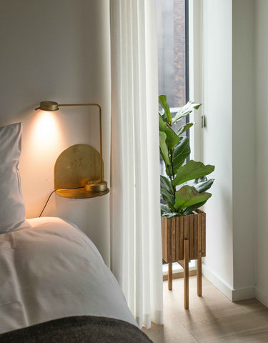 bedroom-natural-light-plants