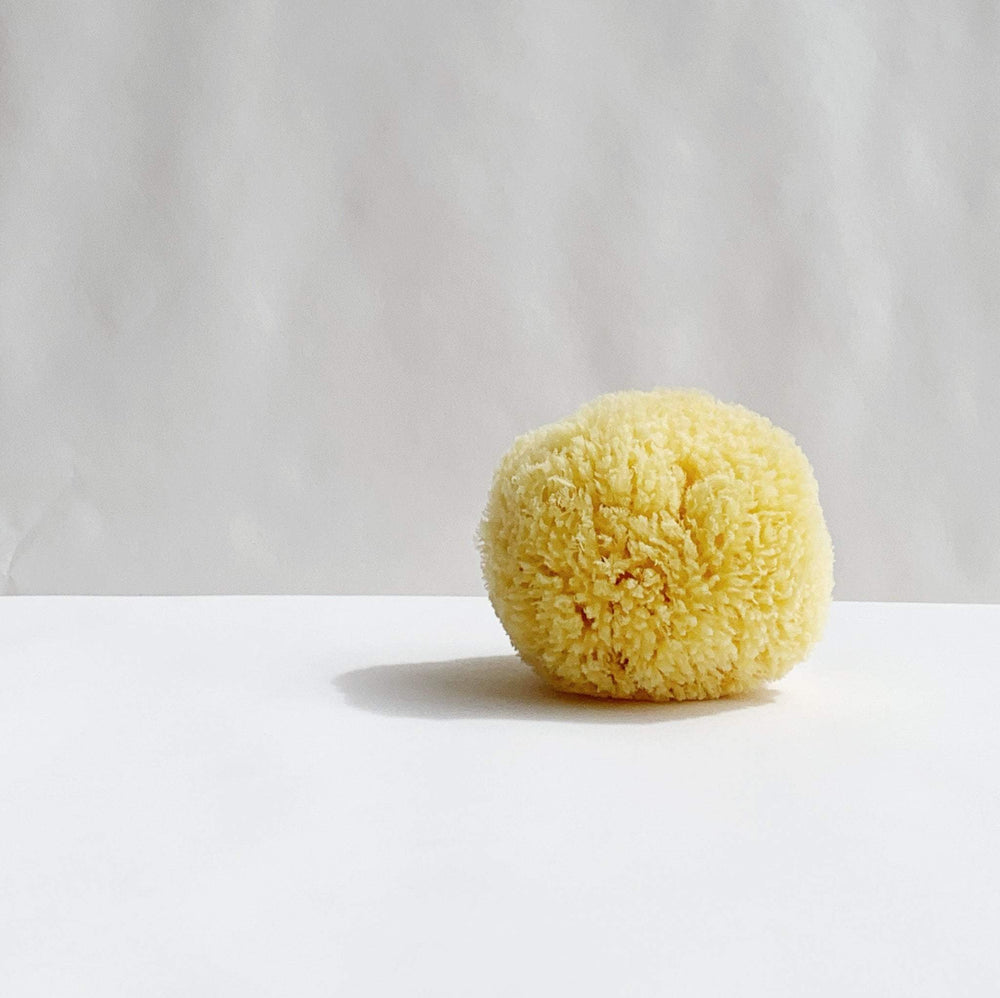 MODM Body Sea Sponge Accessories MODM