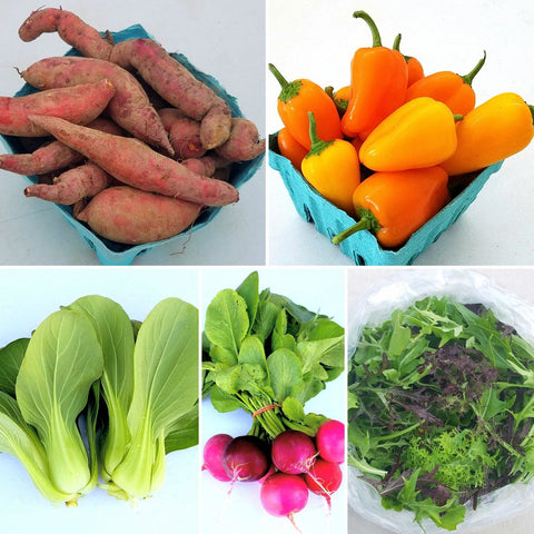 Dicot Veggie Bag line-up for November 3rd