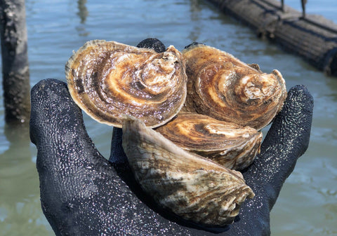 How to shuck an oyster + a ramp bulb mignonette recipe