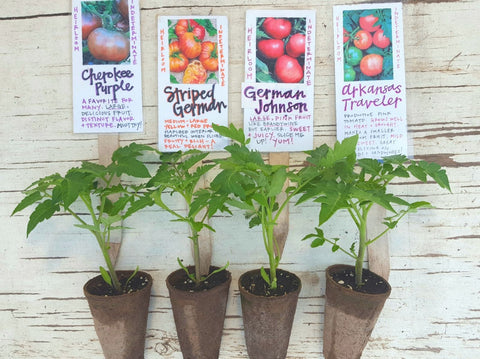 Heirloom Tomato Plant Pack Fireside Farm 4-pack