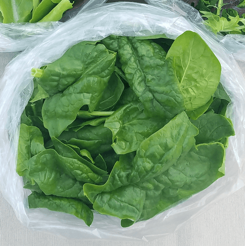 Organic Spinach Greens Dicot Farm