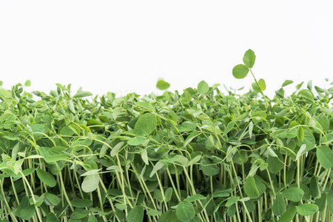 Pea Shoots Little Wild Things Half Pound