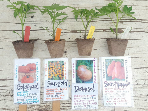 Productivity Tomato Plant Pack Fireside Farms 4-pack