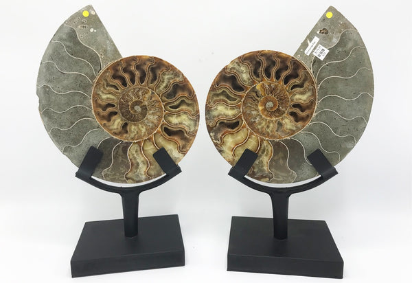 Ammonite Pair - Zero Point Crystals