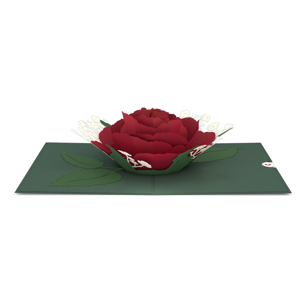 Red Rose Bloom Pop-Up Card