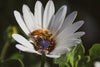 Bee friendly! How to bring the bzzz to your garden