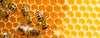 Bees in their hive making honey for bee yü natural skincare