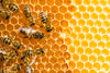Making natural skincare; honey bees in their hive