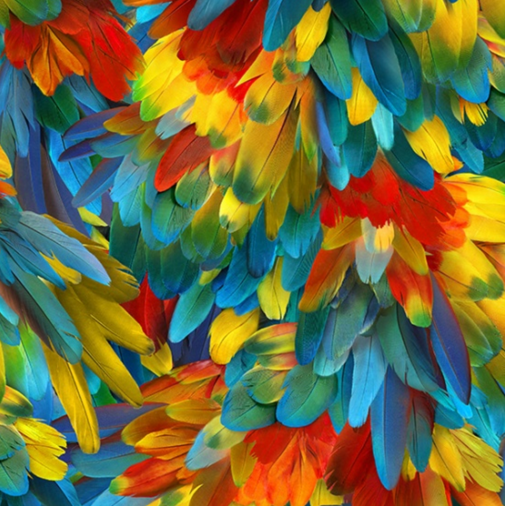 Call of the Wild - Parrot Feathers Digital Print by Hoffman Fabrics