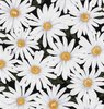 Sunny Days - Packed Daisies by Timeless Treasures | Royal Motif Fabrics