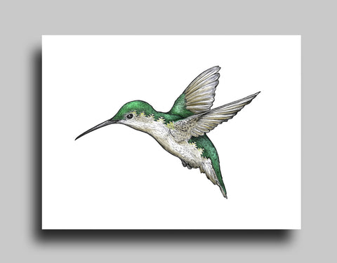 Hummingbird White - Canvas