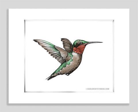 Ruby Throated White - Paper