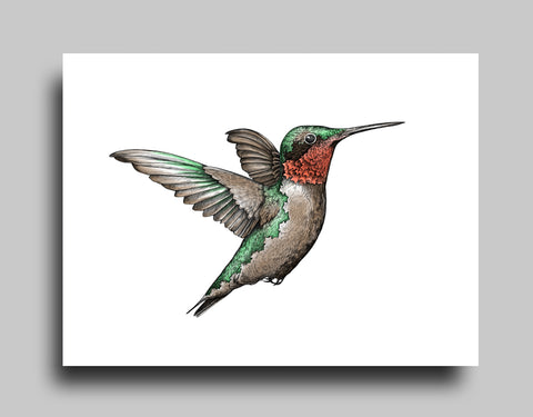 Ruby-Throated White - Canvas