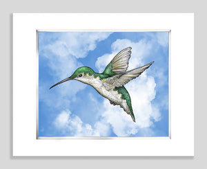 Hummingbird Blue - Paper