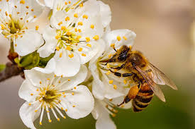 The Incredible Benefits of Bees
