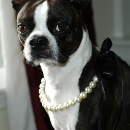 Pearl Pet Necklace