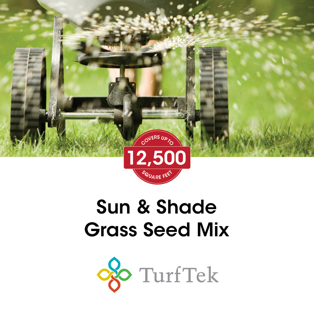 Sun & Shade (80/20) Grass Seed Mix - Covers up to 12,500 Square Feet