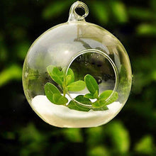 Hanging Glass Globe Terrarium