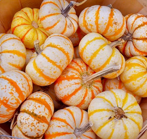Kids Pumpkin Painting Party Make & Take