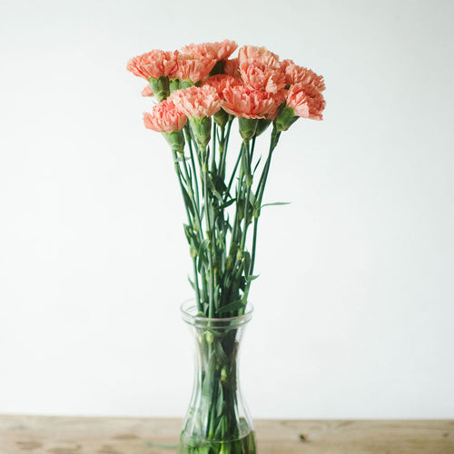 Carnations - Orange  - Bunch