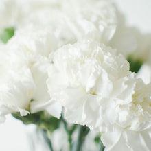 Carnations - White  - Bunch