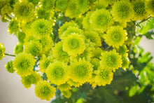 Pom Poms - Button - Green  - Bunch
