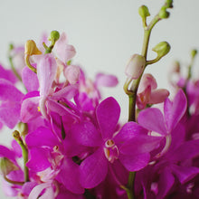 Orchids - Mokaras & Arantheras - Purple  - Bunch