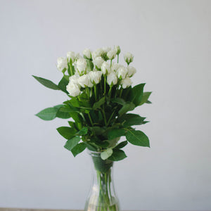 Spray Roses - White  - Bunch
