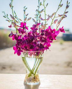 Orchids - Dendrobiums - Purple  - Bunch