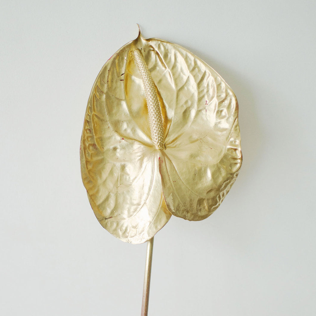 Anthurium - Gold