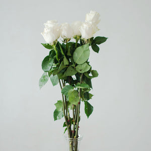 Roses - White  - Bunch